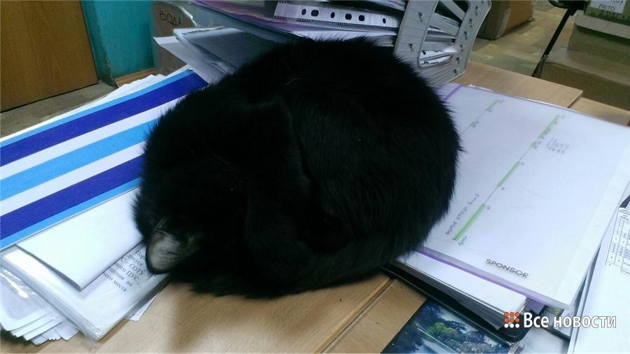 Котя-показатель холода