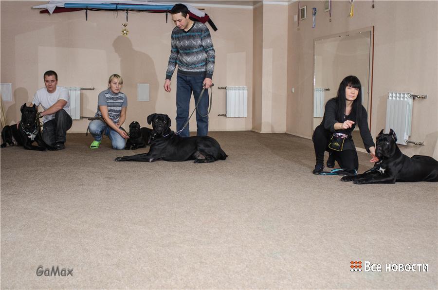 Занятие в зале с большими собаками
