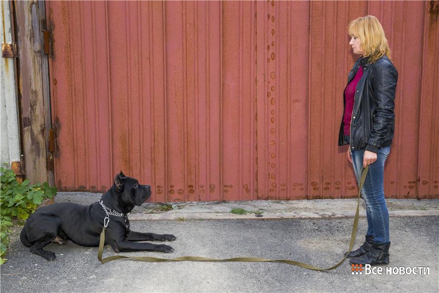 Пёс выполняет команды Натальи на расстоянии