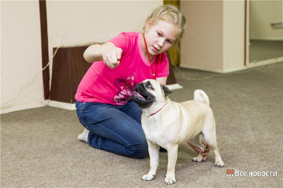 На занятии у Яны девочка учит собаку правильной стойке