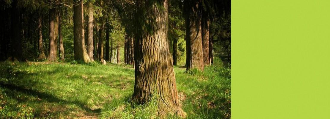 Как не заплутать в лесу?