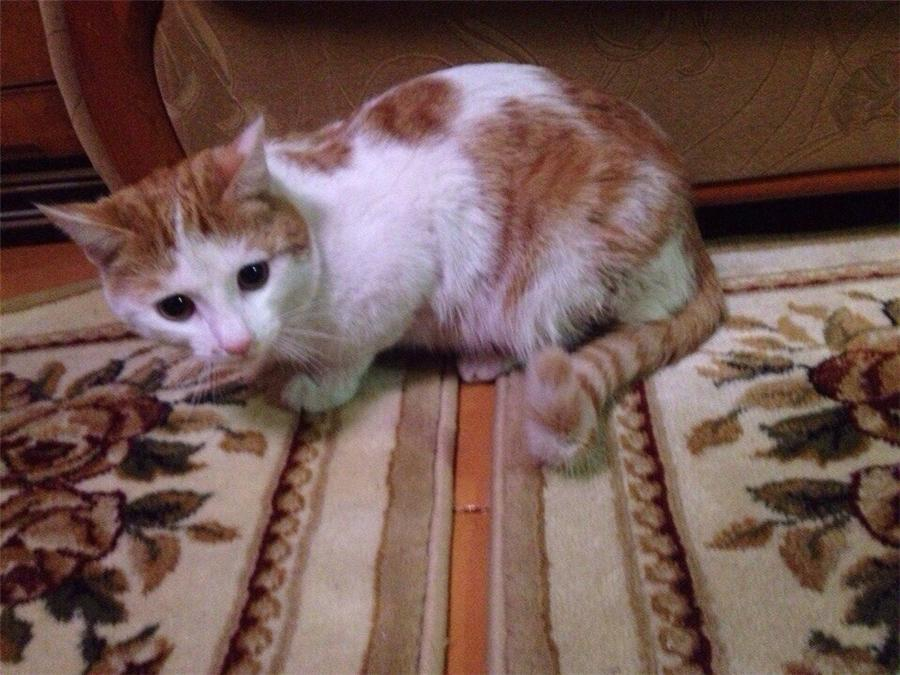 Моего кота убил сосед