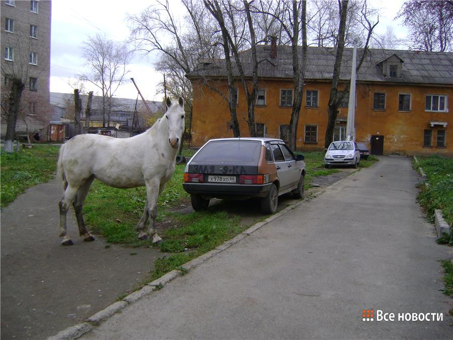 В октябре фото одиноко гуляющей лошади прислали к нам в редакцию