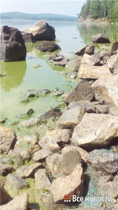 Вода в Черноисточинском пруду, из которого пьёт Нижний Тагил