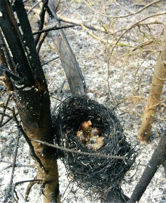 Последствия пожара на Оленем камне