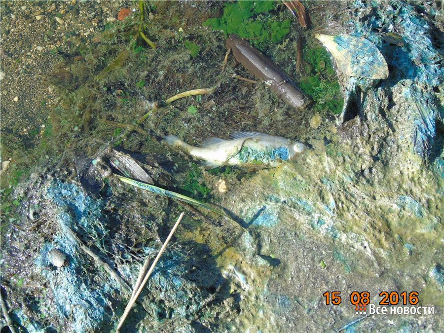 ВНижнем Тагиле вводопровод пошла вода сзапахом аммиака