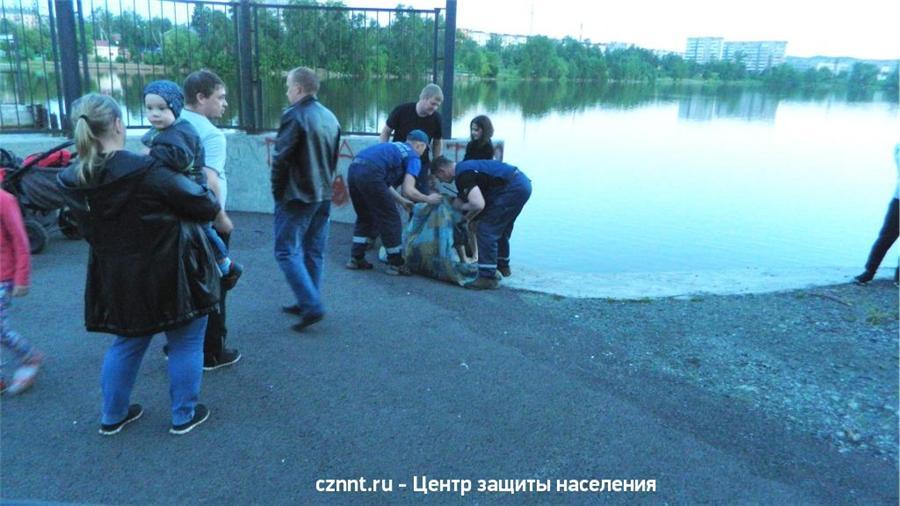 Под Нижним Тагилом при жутких обстоятельствах утонула девочка