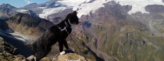 Кот-путешественник Граф добрался до Первого канала