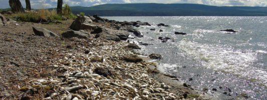 Природоохранная прокуратура: тагильский филиал РГППУ загрязняет сточными водами Черноисточинское водохранилище