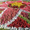 Амаранты, бархатцы и георгины: почти 150 тыс цветов высадят этим летом в Нижнем Тагиле